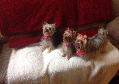 Betsy, Dodge & Jessica