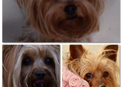 Carmello, Fergie, Pixie