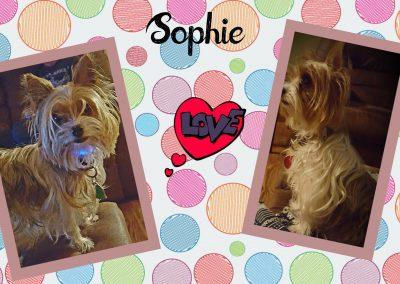Sophie the Yorkie