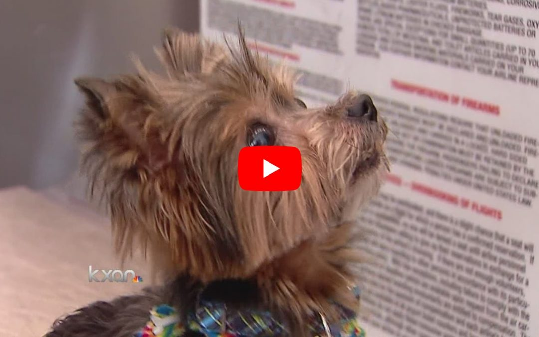 Happy Reunion for Yorkie Missing for Six Years!