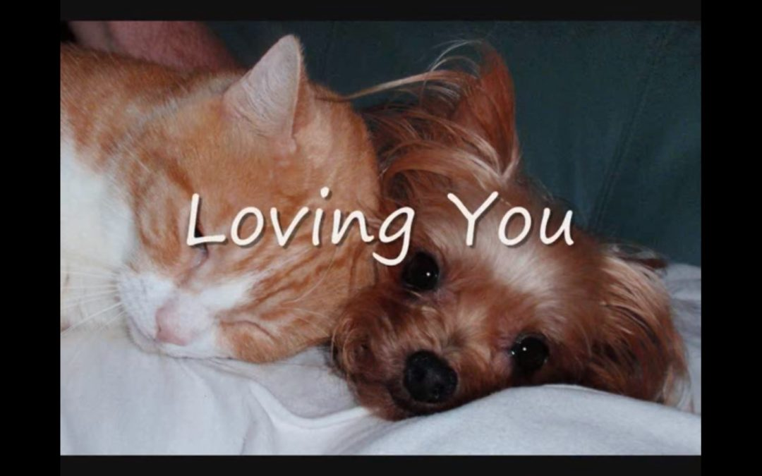 Little Yorkie and Cat are Best Friends!