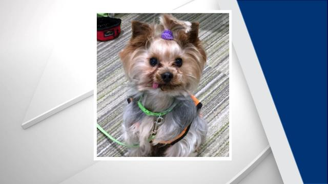 Durham Woman Reunited with One of Two Stolen Yorkies