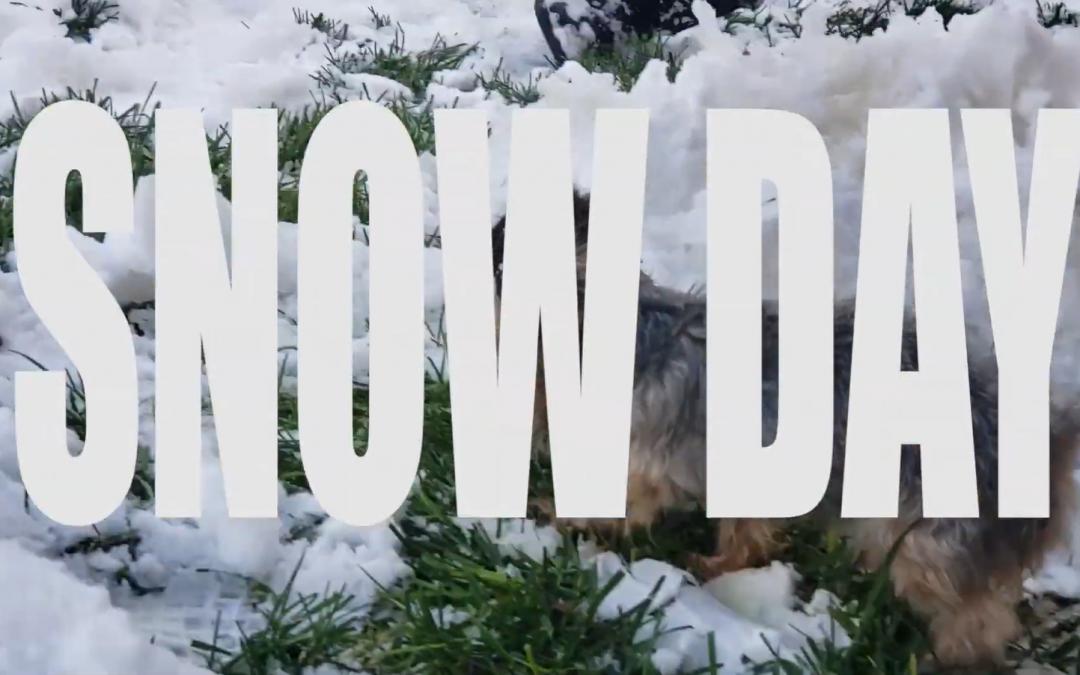 Yorkie Snow Day!