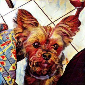 yorkie dog painting