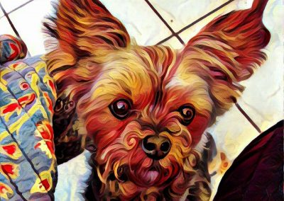 A Painting of Brody the Yorkie