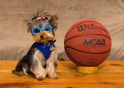 Jasper the Yorkie Loves Basketball