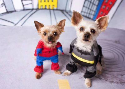 yorkies in halloween costume