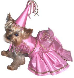 yorkie princess