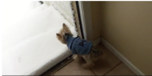 Yorkie sees snow for the first time