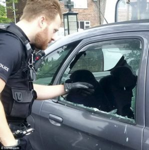 yorkshire terrier saved by cops inside a hot car