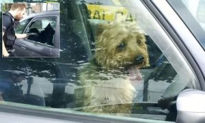 cops saved yorkshire terrier