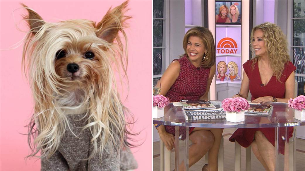 Meet Willamina The Most Stylish Yorkie, Even Kathie Lee and Hoda Agree