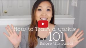 yorkie training video