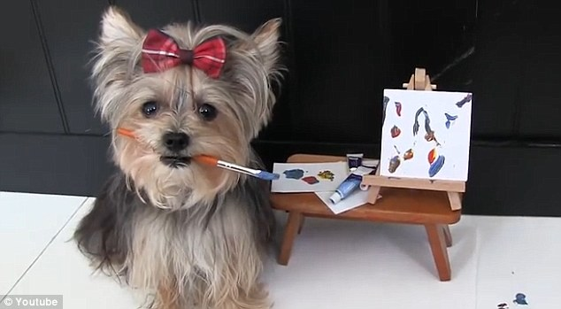 She's One Amazing Yorkie… She's Misa Minnie!