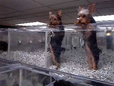 Having a Bad Day? Here's a Salsa-Dancing Yorkie