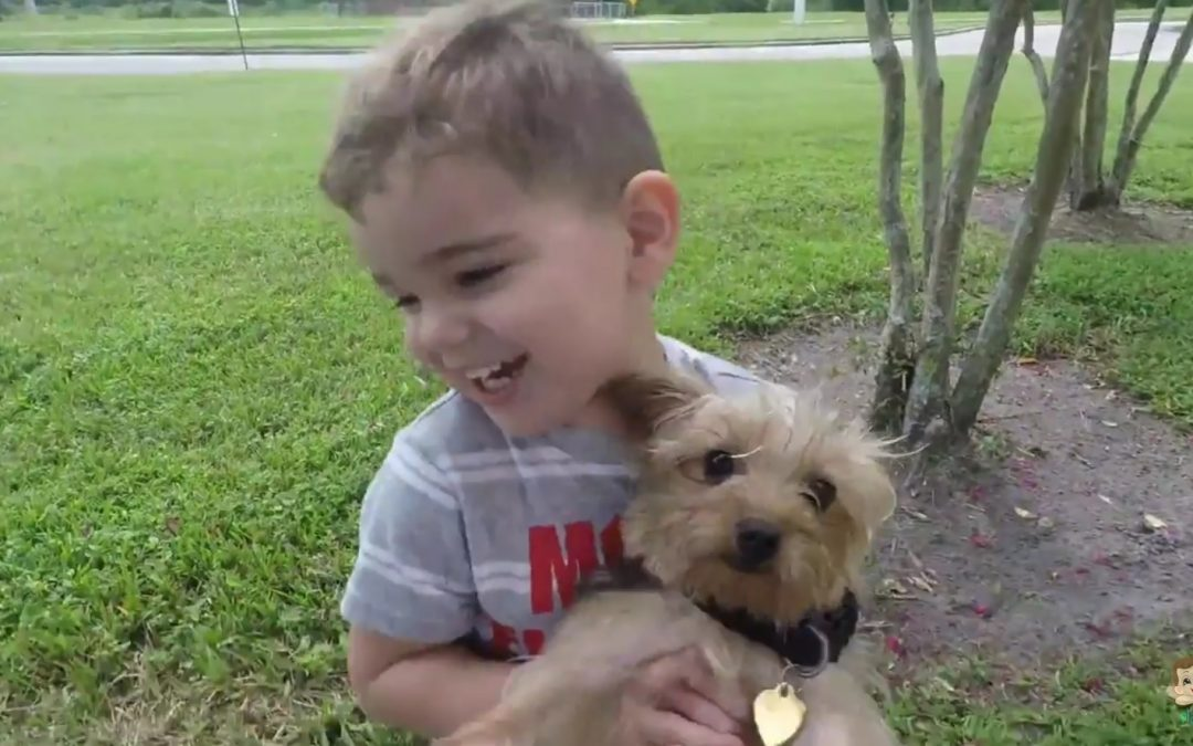 Little Boy Plays Outdoor with Cute Yorkies