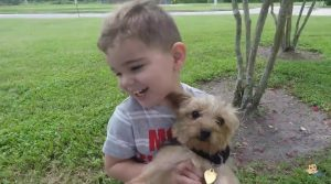 Little Boy and Yorkies