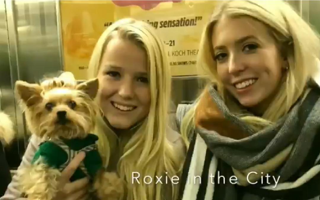 A Jolly Yorkie Christmas starring Roxie the Yorkie 🎁🎄❤️