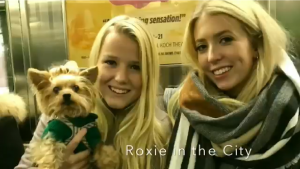 yorkie dog with two blondes