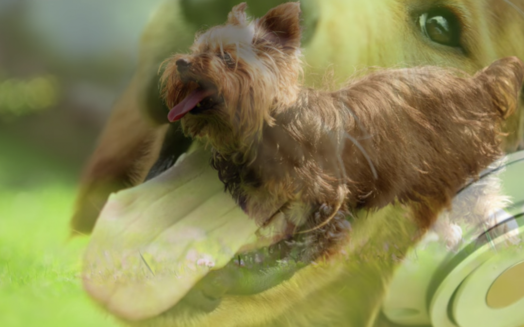 Have You Tried Music Therapy For Your Yorkie?