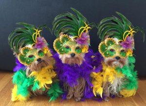 three yorkies wearing colorful costumes