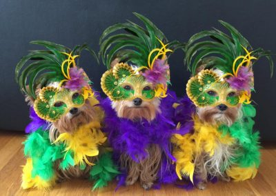 three yorkies wearing colorful costumes