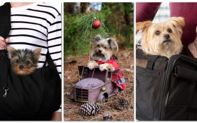 The Best Carriers for Your Yorkie