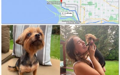 Chilli the Yorkie Mix Goes on a Very Long Walk!